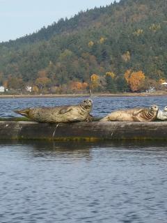 Seals lounging