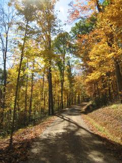 An Autumn Adventure
