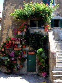 flowered corner in the village