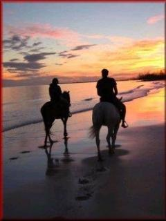 Horse riding available