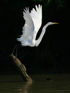 A white egret offers many opportunities for a beautiful photo moment