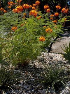 Newly Planted Xeroscape Garden