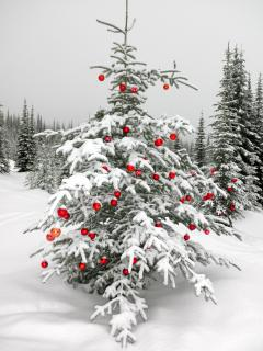 Sun Peaks Christmas Trees, to be found on many runs. Decorated by hand by families each season.