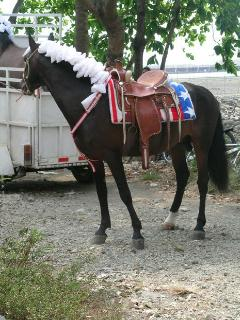 Day of the Horses in Quepos