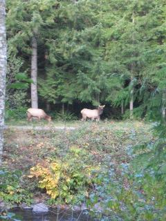 Elk Watching at the Luxurious Riverfront Log Home.