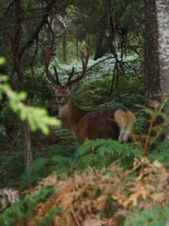 Local wildlife near The Lodges