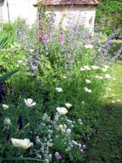 Our garden in Flower