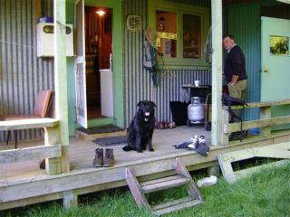 Ollie dog on deck
