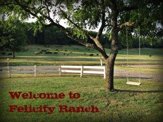 Felicity Ranch - over 180 acres to explore!, Mountainburg