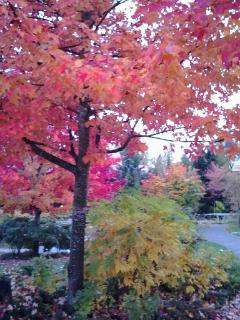 Fall 2012 - spectacular colours