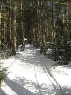 Miles of groomed Cross Country Ski trails like these surround condo and association property