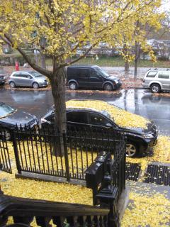 Fall street view