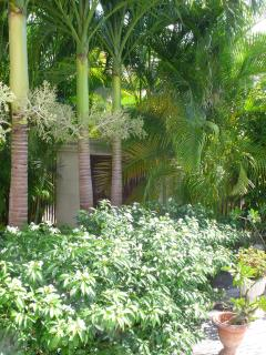 Garden palms by entrance pathway