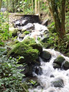 Rainforest Stream ~~ Waterfalls everywhere! Thanks Scott for some great Pics!