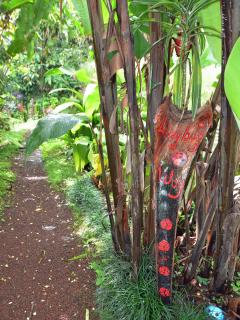 LadyBug Trail.. well manicured with lots of Orchids and  photo opportunities