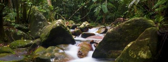 Here is a picture taken at Mossman Gorge inside the Daintree: