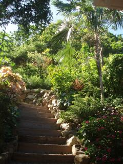 Stairs through tropical garden