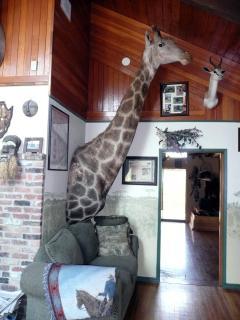 Giraffe in Africa Room