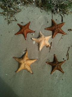 water stars at culebra beach!!