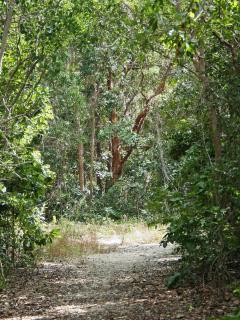 Trail and gumbo limbo tree in Dagny Johnson State Park, Key Largo.