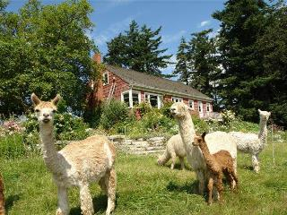 View, beach, vintage farmhouse, alpacas, birds, sunrise & sunset -- get it all