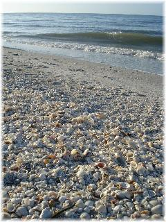 Plenty of seashells to pick through!