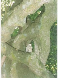 Beach tree in spring with baby owl
