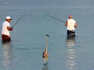 Two happy fisherman and a heron on Isla