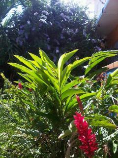 Quinta Gardens