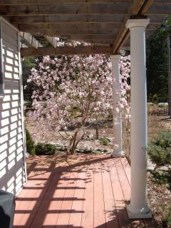 magnolia off the deck