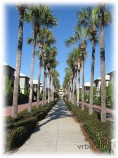 Palm lined walkway to beach