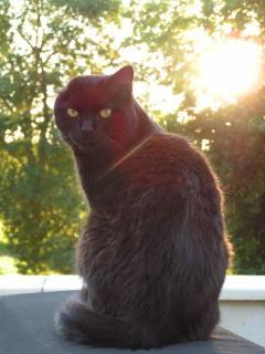 Vincent the Guard Cat