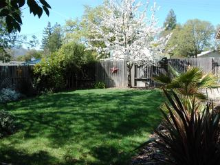 Back yard in Spring