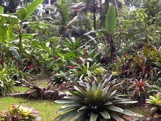 Giant Bromeliad garden vied from porch
