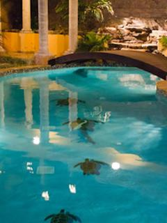 Heated pool for comfortable night swimming