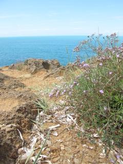 Hike through Woods to the Sea and Baratti Beach