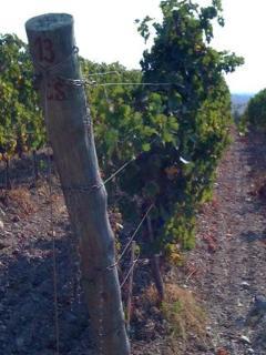 Nearby Tenuta Poggio Rosso Vineyard