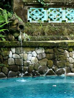 Swimming pool and frog fountain