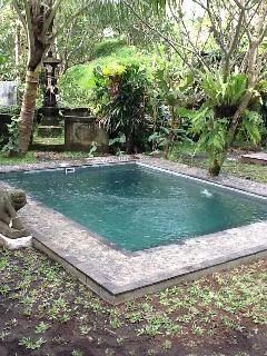 Beautiful Saltwater pool- pre grass grown
