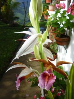 Orchids on the farm