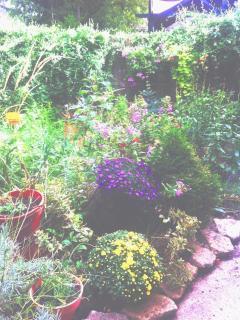 Fall gardens
