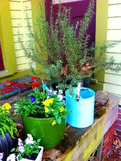 Front Entry- Smell the Rosemary!