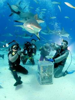 Great fun,  diving with the sharks