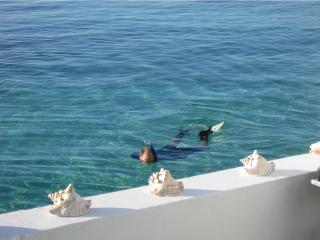 Snorkeling in front of your downstairs patio