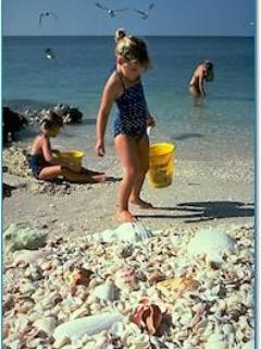 Sanibel's Famous Shellson Bowmans Beach