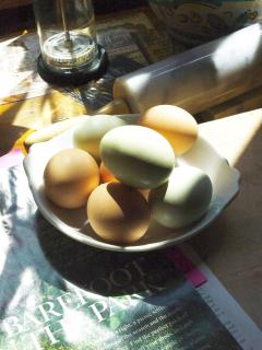 Fresh eggs laid daily! :)