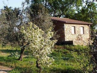 The Almond Tree, farm holidays in Tuscany 4+2 beds, Suvereto