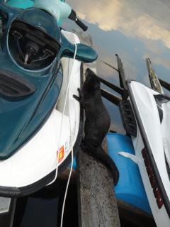 What Mr. otter you want to go jet skiing?