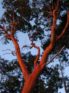 Majestic arbutus surround guest house