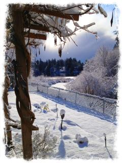 Winter Wonderland - view from patio